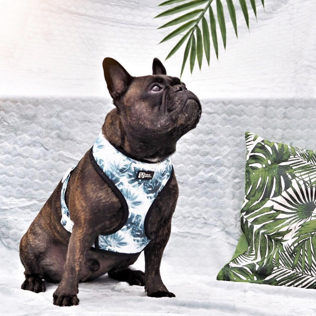 posh palms harness