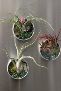 Magnetic Terrariums