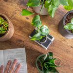 Plants Improve Concentration, Productivity, and Overall Mental Health