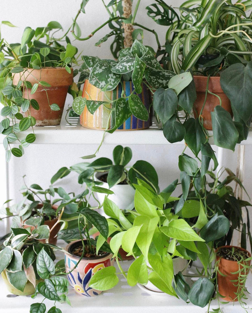 Kick Off Spring By Prepping Your Plants!