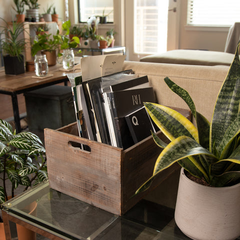 Many indoor plants go dormant in the colder seasons