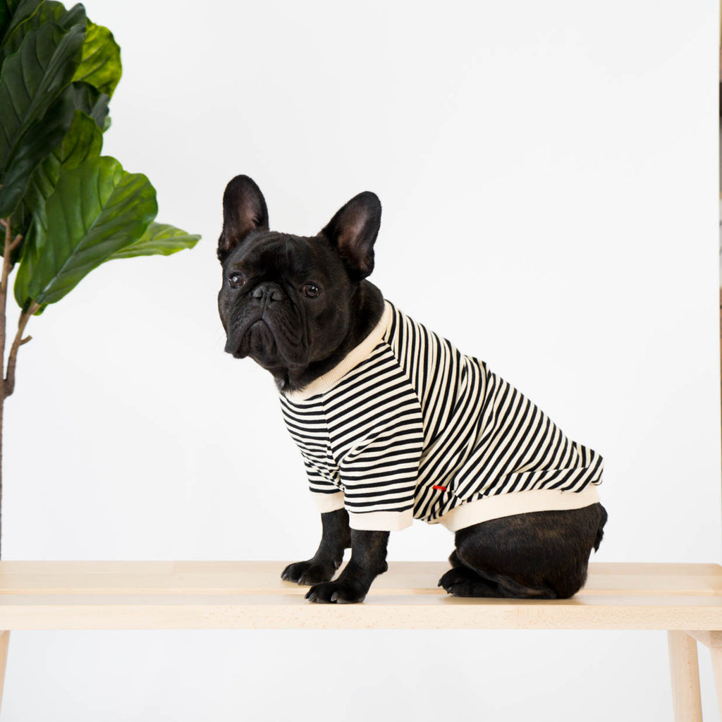 Striped T-Shirt for French Bulldogs