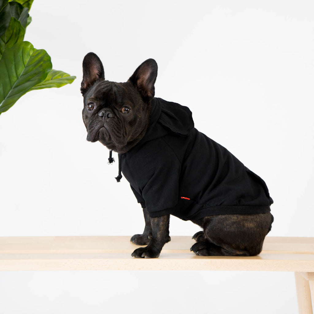 Black Hoodie with Ears for French Bulldogs