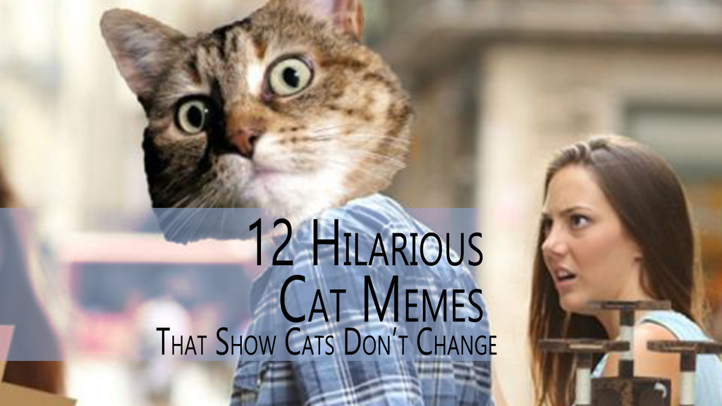 12 Hilarious Cat Memes That Show Cats Don't Change, Even If the World Does