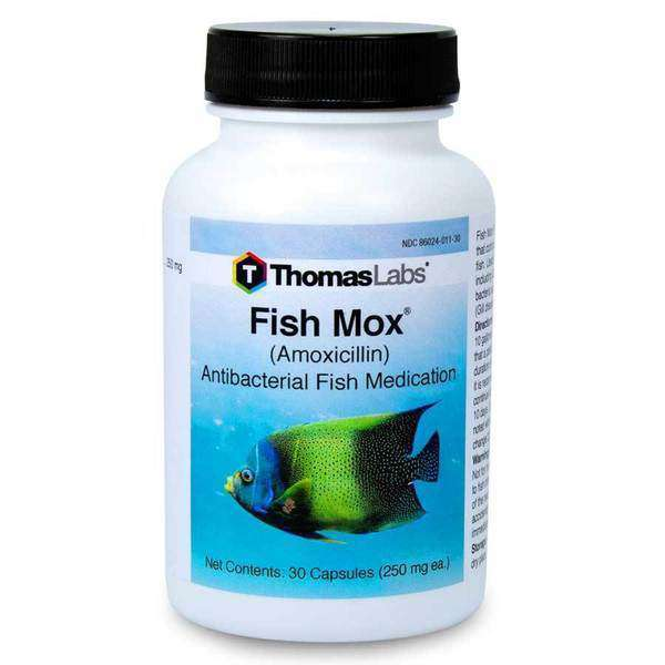 Fish Mox - Amoxicillin 250 mg Capsules (30 Count)