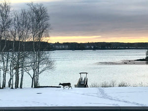Hello and Happy Saturday from Maine!  I was able to snap these photos of a family of four deer passing through our backyard yesterday before the big storm wiped out all the snow. Deer on Christmas morning, what a wonderful surprise!   On the to-do...