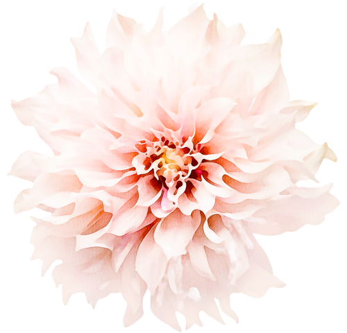 Floral Wall Decals - Dahlia