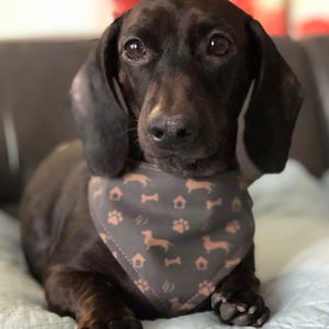 Louis Doxie Shorthair Bandana for dogs reversible