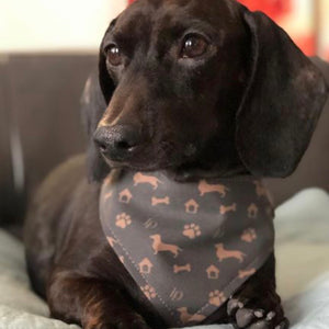 Model Lucky @lucky_thecharmedone In Louis Doxie Shorthair Silhouette Bandana