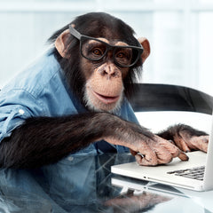 Business chimpanzee doing important computer work