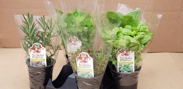 Culinary Mix - Herb Box
