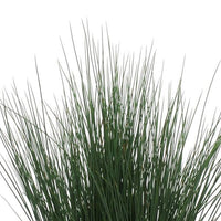 "Juncus tenuis Blue Dart Grass - Annual 4 1/2"" - Each"