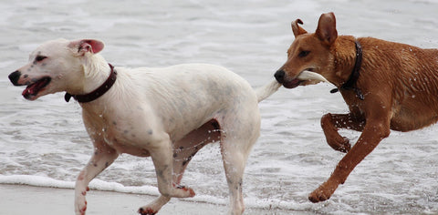 Stop Animal Cruelty Dogs Playing in the beach