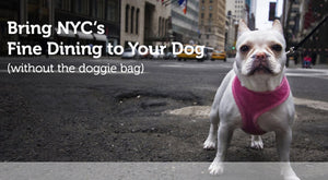 Raw Dog Food Delivery in NYC