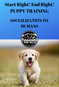 4. Start Right! End Right! Puppy Training, The Taming the Wild Way - Socialization to Humans