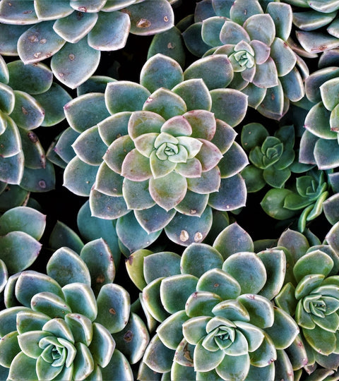 5 Reasons We LOVE Succulents