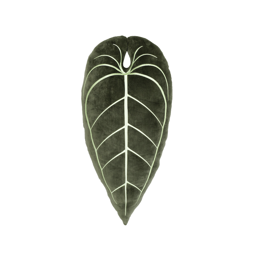 Anthurium Warocqueanum Plush Pillow - Khaki Green