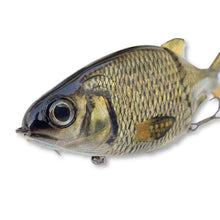 Load image into Gallery viewer, Swimbait Underground X 86 Baits Glide - Golden Shiner - Swimbait Underground