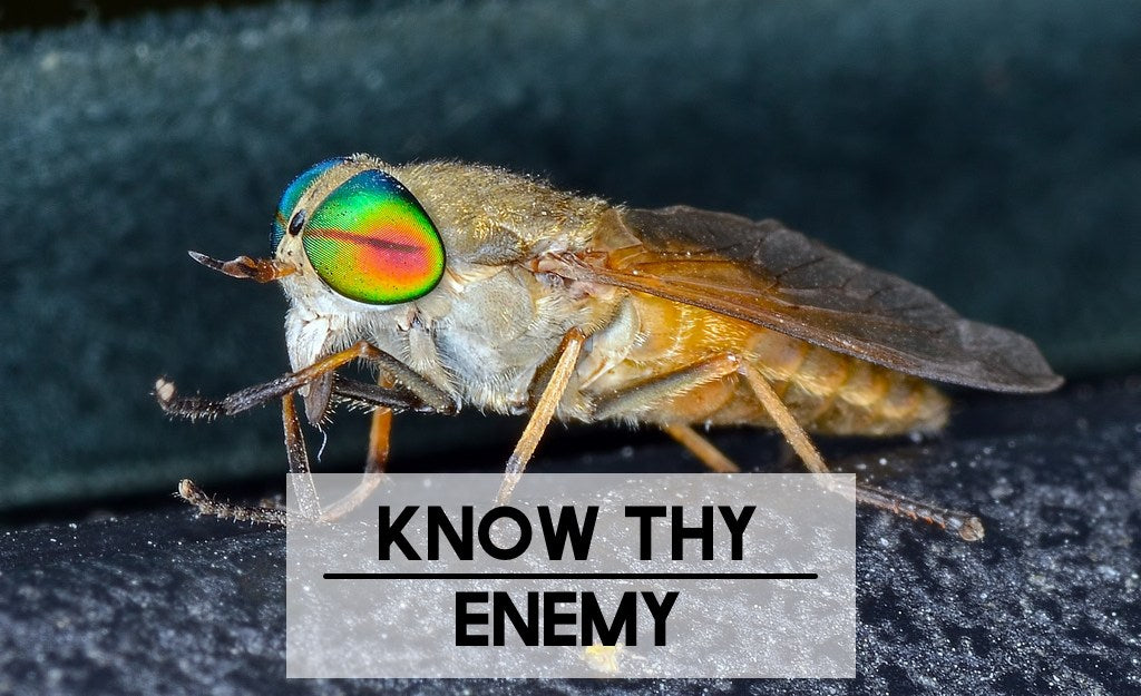 Horse flies, Deer flies, Yellow flies, and Green heads — Know Thy Enemy