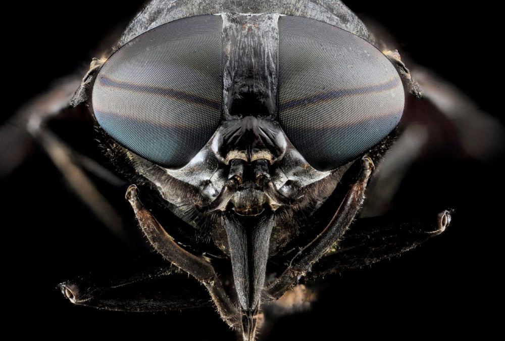 5 Facts You Didn't Know About Horse Flies