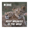 'Virtual gift' card  –  Keep Wildlife in the Wild