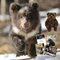 Adopt - The Brown Bear Orphans