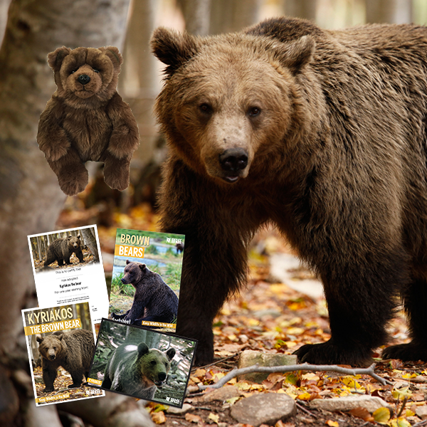 Adopt A Brown Bear - Kyriakos