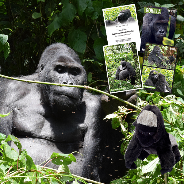 Adopt A Gorilla - Chimanuka and Mugaruka