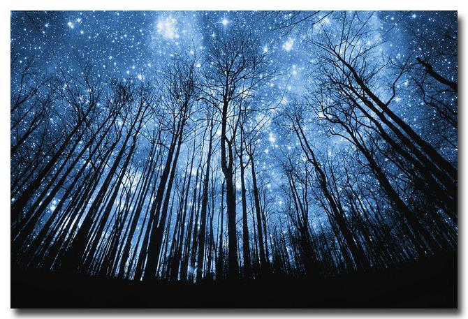 Starry Night Woods Canvas - uniquelyfurniture.com