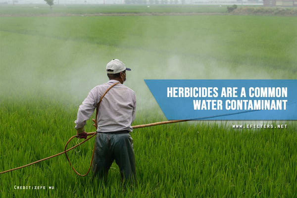 Herbicides common water contaminant