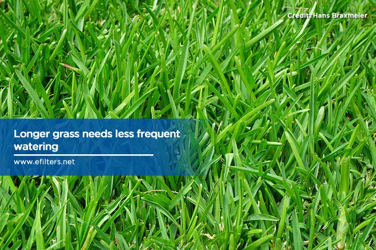 Longer grass needs less frequent watering