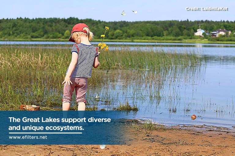 The Great Lakes support diverse and unique ecosystems