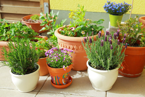 herbs in different pots