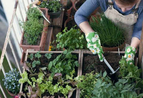 woman planting an herb garden