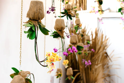 plants-in-hanging-planter-pots | Cestash