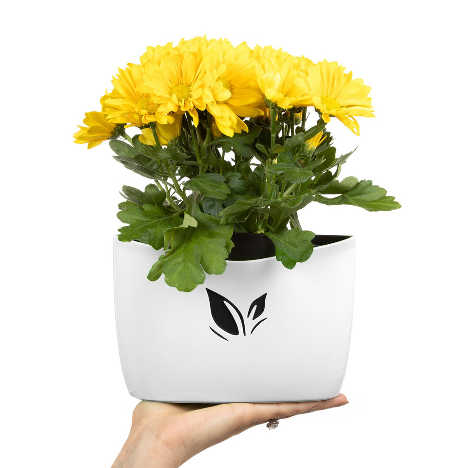 wall mount flower pot