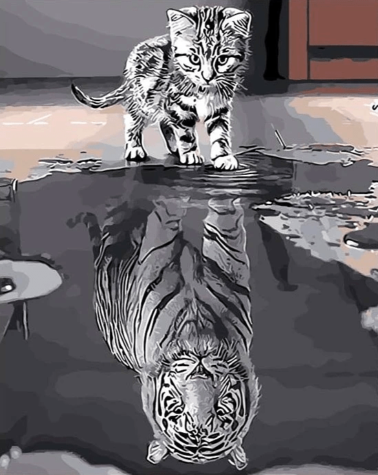 Reflection Cat Tiger  Paint By Number Kit