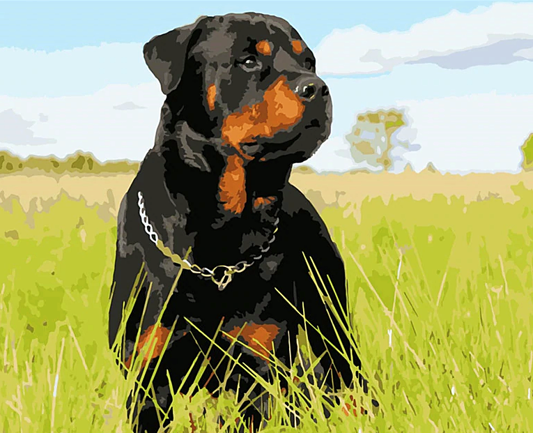 Rottweiler Paint by Numbers