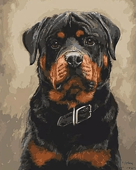 Paint by Numbers Kit Rottweiler Dog - Just Paint by Number