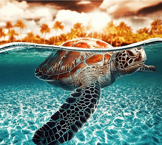 Paint by Numbers Kit - Diving Turtle Sea