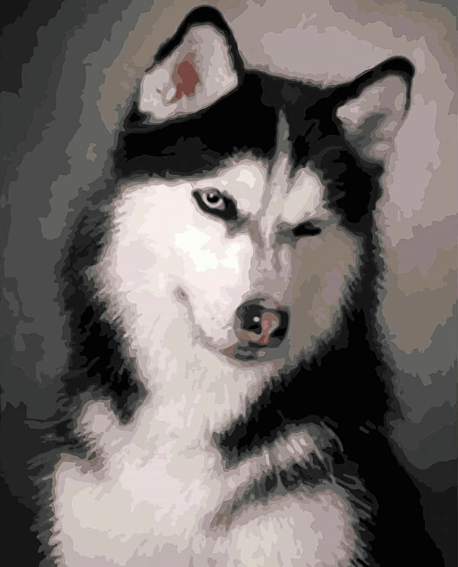 Paint by Numbers Kit Dog Cute Husky - Just Paint by Number