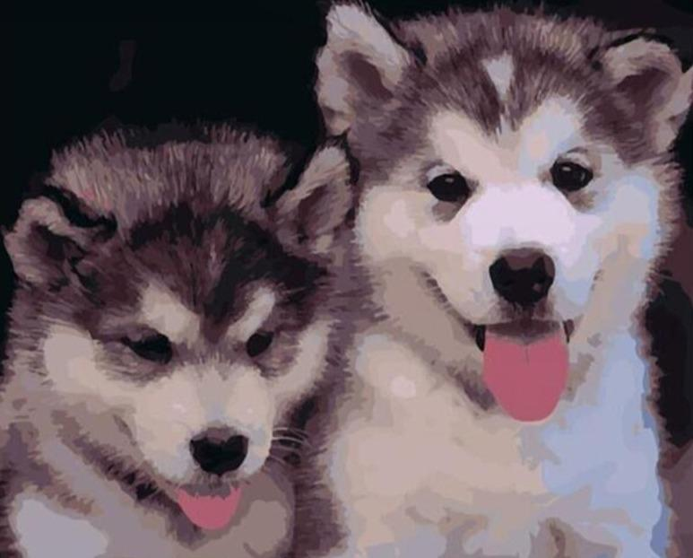 Paint by Numbers Kit Puppies Husky - Just Paint by Number