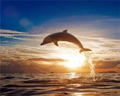 Sunset Dolphin Paint By Number Kit