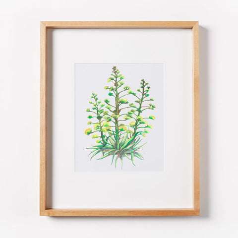 Arizona Christmas Trees Print