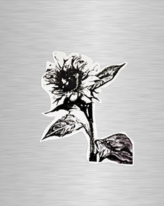 B&W Sunflower Vinyl Sticker/Decal