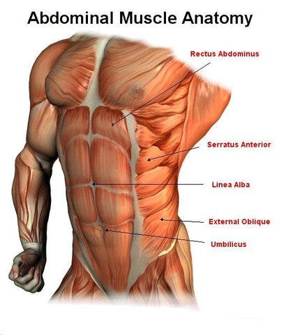 "<img src=""AbsDiagram.png"" alt=""Ab Muscle Diagram"">"