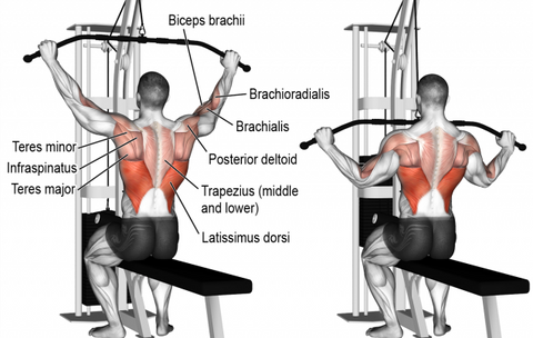 "<img src=""Latpulldown.png"" alt=""Lat Pull Down Back Exercise"">"