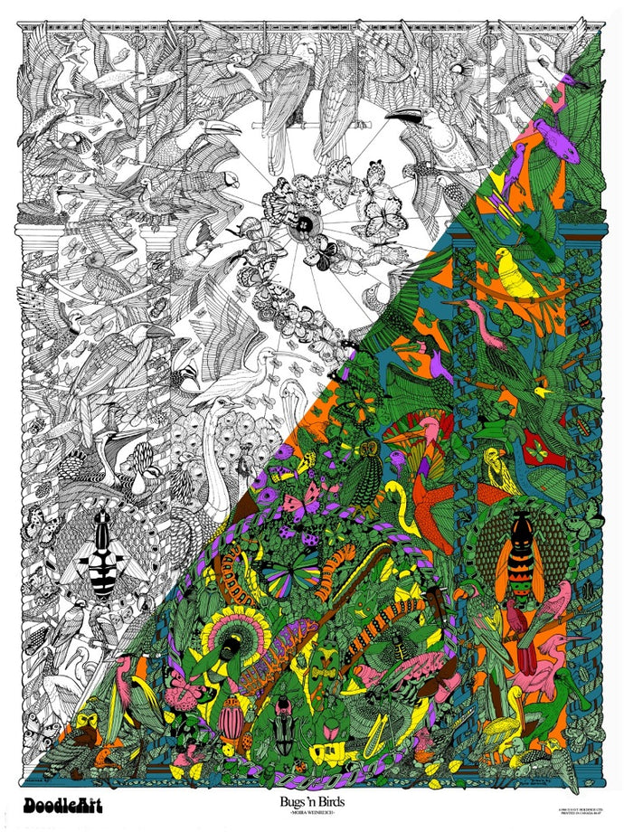 Bugs & Birds Doodle Art POSTER KIT (24 x 34 inch)