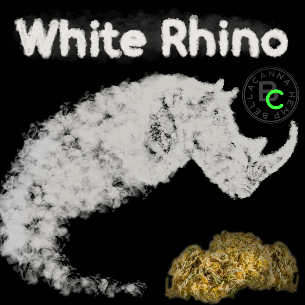 bella canna white rhino cbg hemp flower