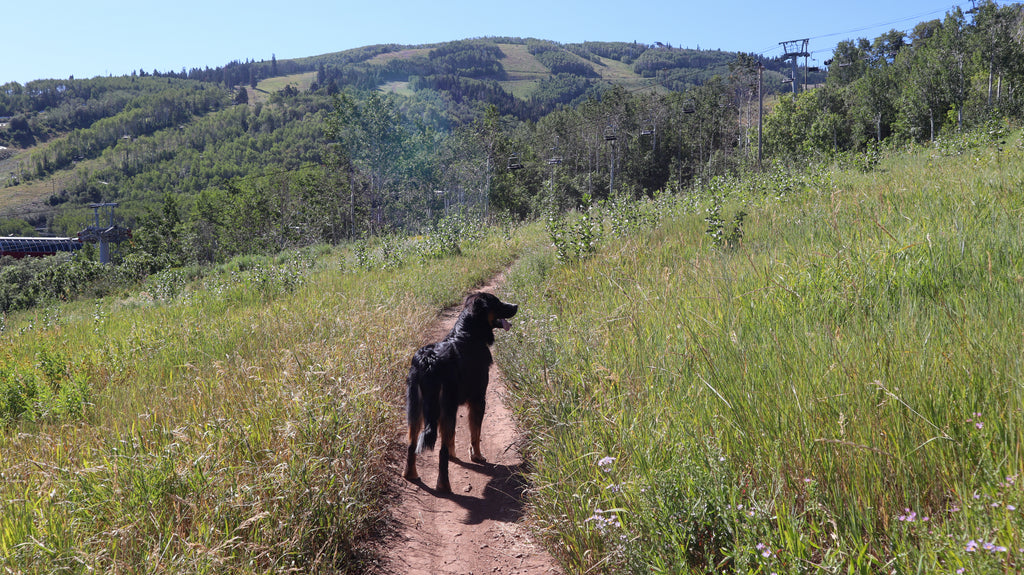 10 dog friendly hikes around Park City